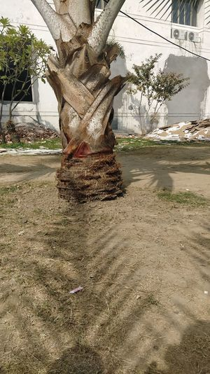 View of tree trunk in park