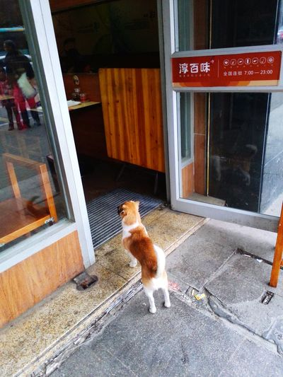 Dog Life Anybody? I'm Hungry  老板娘在吗?爷来啦,快招呼客人啊!!