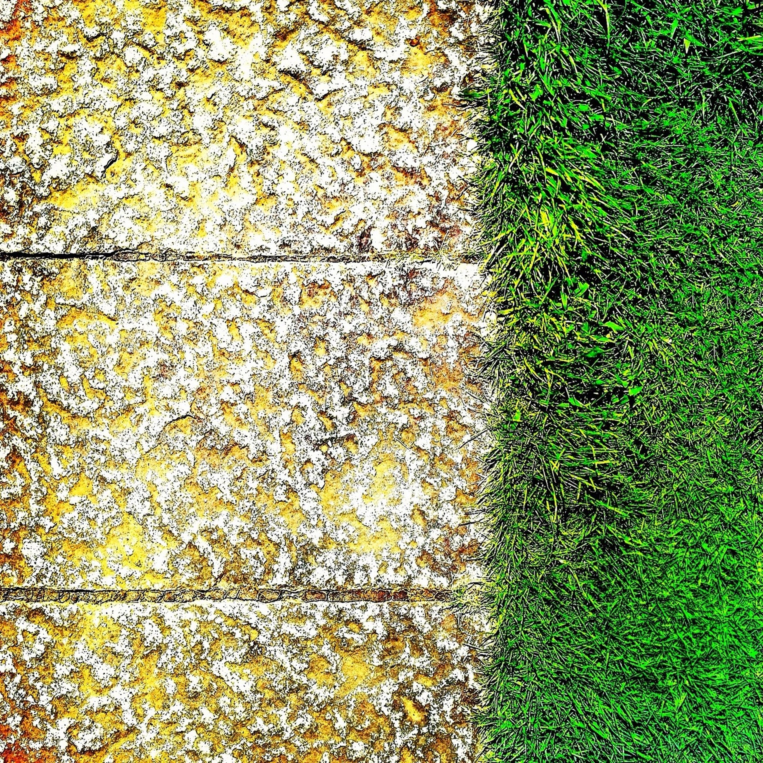 growth, full frame, green color, yellow, high angle view, plant, backgrounds, leaf, textured, nature, day, outdoors, grass, no people, ivy, sunlight, moss, beauty in nature, field, season