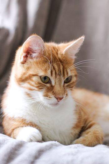 cat part 1 Cat