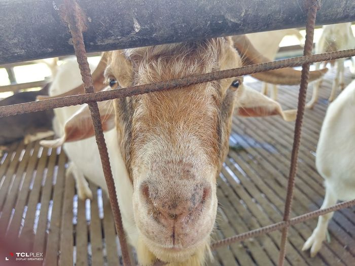 Close-up of a horse in cage