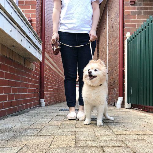 Saturdaymorning Walking The Dog 🦁