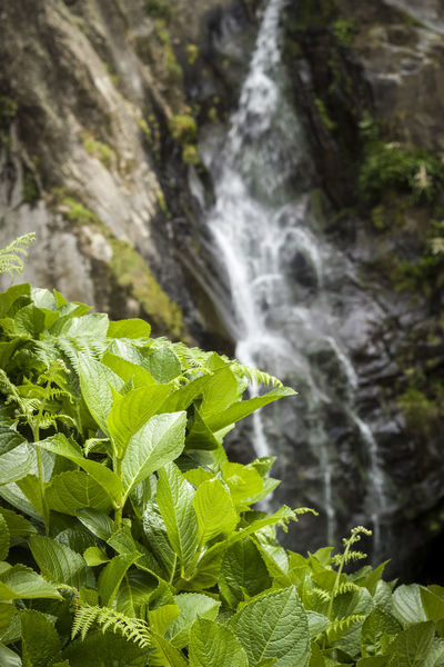 Desfocus Nature Green Color Beauty In Nature Leaf No People Freshness Outdoors Growth Water Waterfall Forest Close-up Day Açores - São Miguel Vodafone Smart Ultra 6 Eos550d 50mm