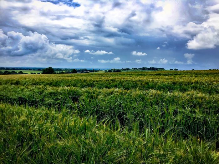 Summer in the Berkshire countryside Agriculture Beauty In Nature Cloud Cloud - Sky Cloudy Crop  Cultivated Land Day Field Grass Grassy Green Color Growth Horizon Over Land Idyllic Landscape Nature No People Outdoors Plant Rural Scene Scenics Sky Tranquil Scene Tranquility