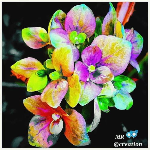 Flower Petal Nature Beauty In Nature Fragility Growth Plant Flower Head No People Freshness Close-up Orchid Outdoors Day Created By Mr Creation