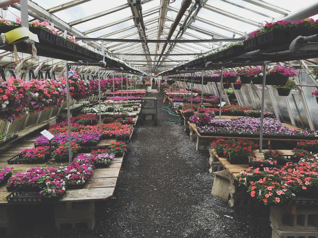 Greenhouse Flowers Spring Garden Store Annuals Floral Shopping Garden Gardening Plants Botanical Planting Colorful Cheerful Happy Pansies Petunia Hanging Plants Planters Cinder Blocks Nursery