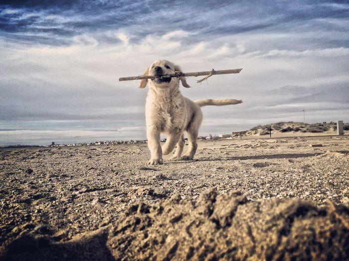 Dog Against Cloudy Sky