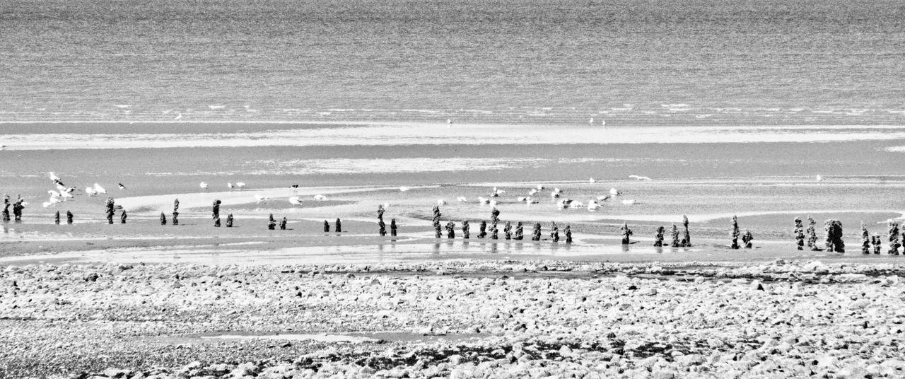 Beach Birds Coastline Delapidated Nature Non-urban Scene Ocean Sand Scenics Sea Seascape Shore Summer Tourism Tranquil Scene Tranquility Vacations Water Wave Breaker Wooden Posts Monochrome Photography
