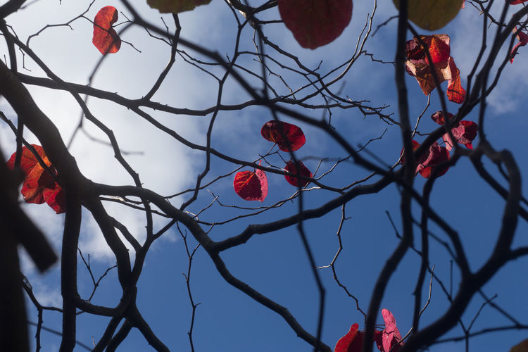 Low angle view of poppy tree against sky