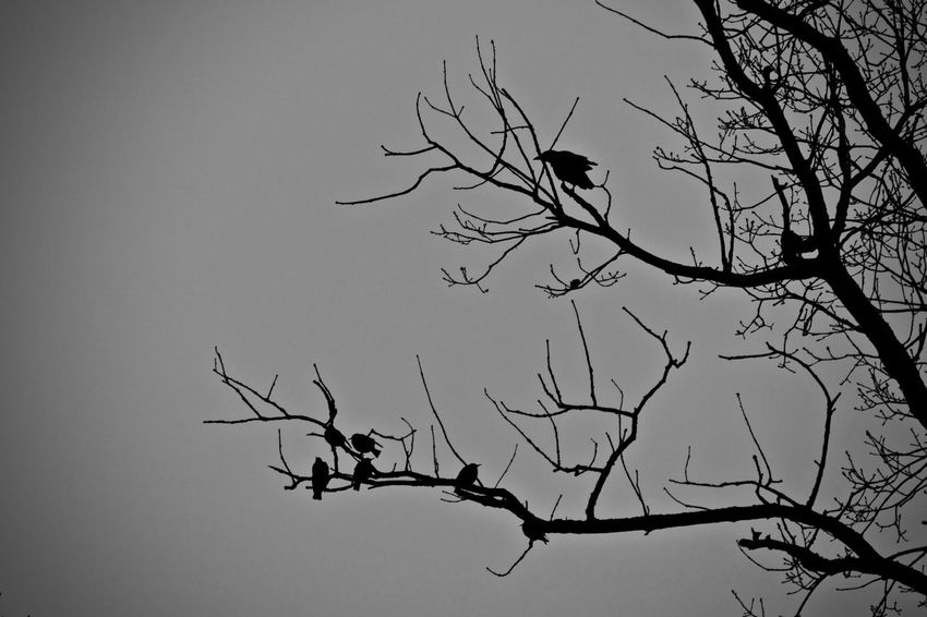 Animal Themes Animals In The Wild Bare Tree Beauty In Nature Bird Bird Of Prey Branch Clear Sky Day Dead Plant Dead Tree Flying Growth Low Angle View Nature No People Outdoors Sky Tranquility Tree