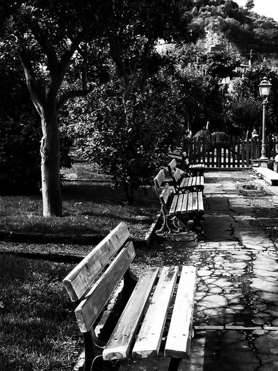 Blackandwhite B&w Streetphotography Black And White Shadow darkness and light Shadows & Lights Oldtown Point Of View Photographer Photography Photo Italy Coast Sorrento Stunning Black Old Art Artistic Artistic Photo Streetlight Streetphotography Streetphoto_bw Street Photography Tree Park Bench Park Bench