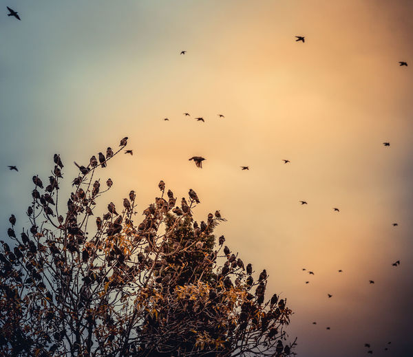 Capture Tomorrow Sky Animal Vertebrate Animal Themes Bird Animal Wildlife Animals In The Wild Beauty In Nature Group Of Animals Plant Large Group Of Animals Flying Sunset Nature Silhouette Tranquility Scenics - Nature Tree Low Angle View No People Flock Of Birds Outdoors