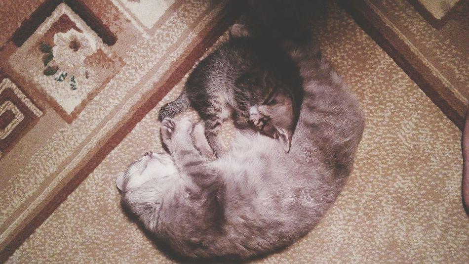 дом родные любимые милые котики семья спят пушистыйкомочек мимими кошка котёнок