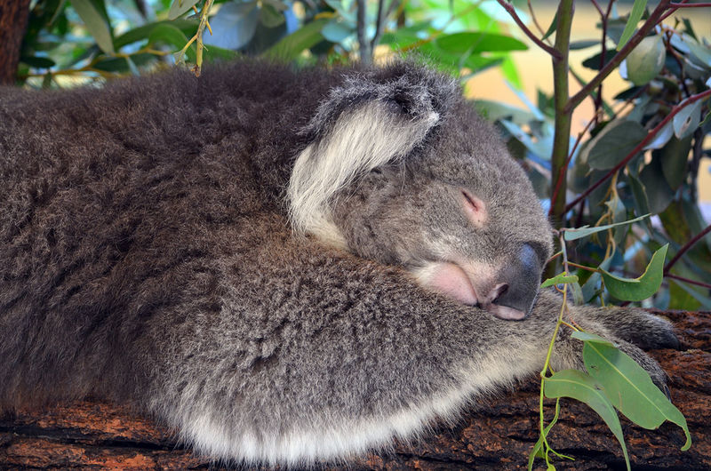 Close-up of koala on plants