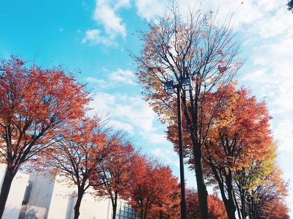 朝日大学 並木道 Asahi University Avenue Tree Beautiful