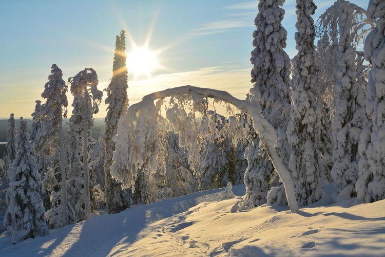 Winter in Finnland. Winter Cold Temperature Snow Beauty In Nature Sunlight Nature Sun No People Frozen Landscape Tranquil Scene Tranquility Scenics - Nature White Color Sunset Bright Schnee Kalt Eis Bäume Im Schnee Finnland