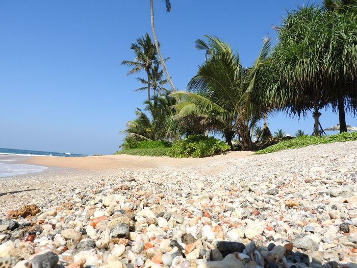 Sri Lanka Beach Beauty In Nature Clear Sky Horizon Over Water Lanka Beach Nature Palm Tree Pebble Beach Sand Scenics Sea Shore Sri Lanka Beach Tranquil Scene Tranquility Tree Plastic Environment - LIMEX IMAGINE The Traveler - 2018 EyeEm Awards