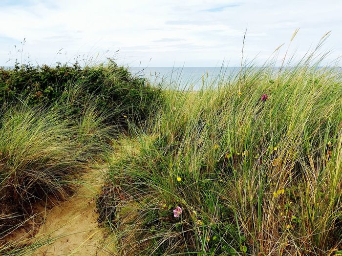 Relaxing Enjoying Life Blue Clouds And Sky Summer Beach Isle Of Man Path Dunes Grass Flowers The Secret Spaces