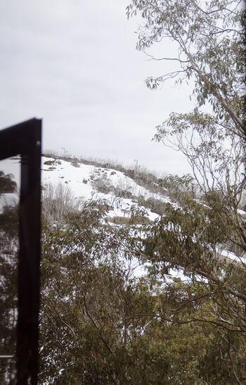 Alpine Australia Alps Alps Australia Bush Snow Cold Its Snowing Landscape Snow