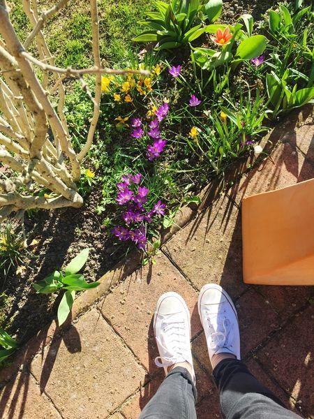 Ein Stück Frühling Spring Flowers Garden White Shoes Krokusse Sun