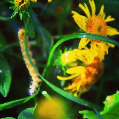 Doğa Dogal Arşiv çiçek tıytıl ??
