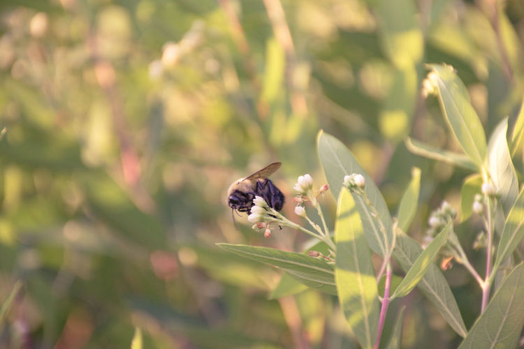 High angle view of bee pollinating on flowers