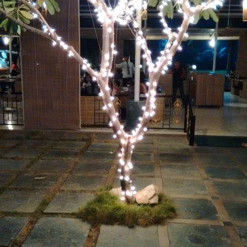 Lights Tree Illuminating Light Decorations Restaurant No Filter