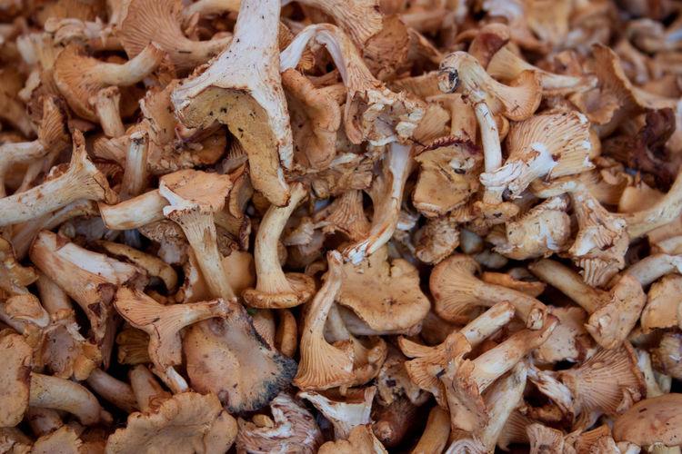 Essen Pilze