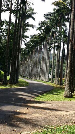Sri Lanka Kandy Botanical Garden No People