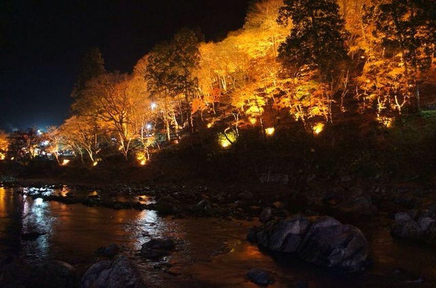 ライトアップ最終日行ってきました。 Japan EyeEm Nature Lover Colored Leaves