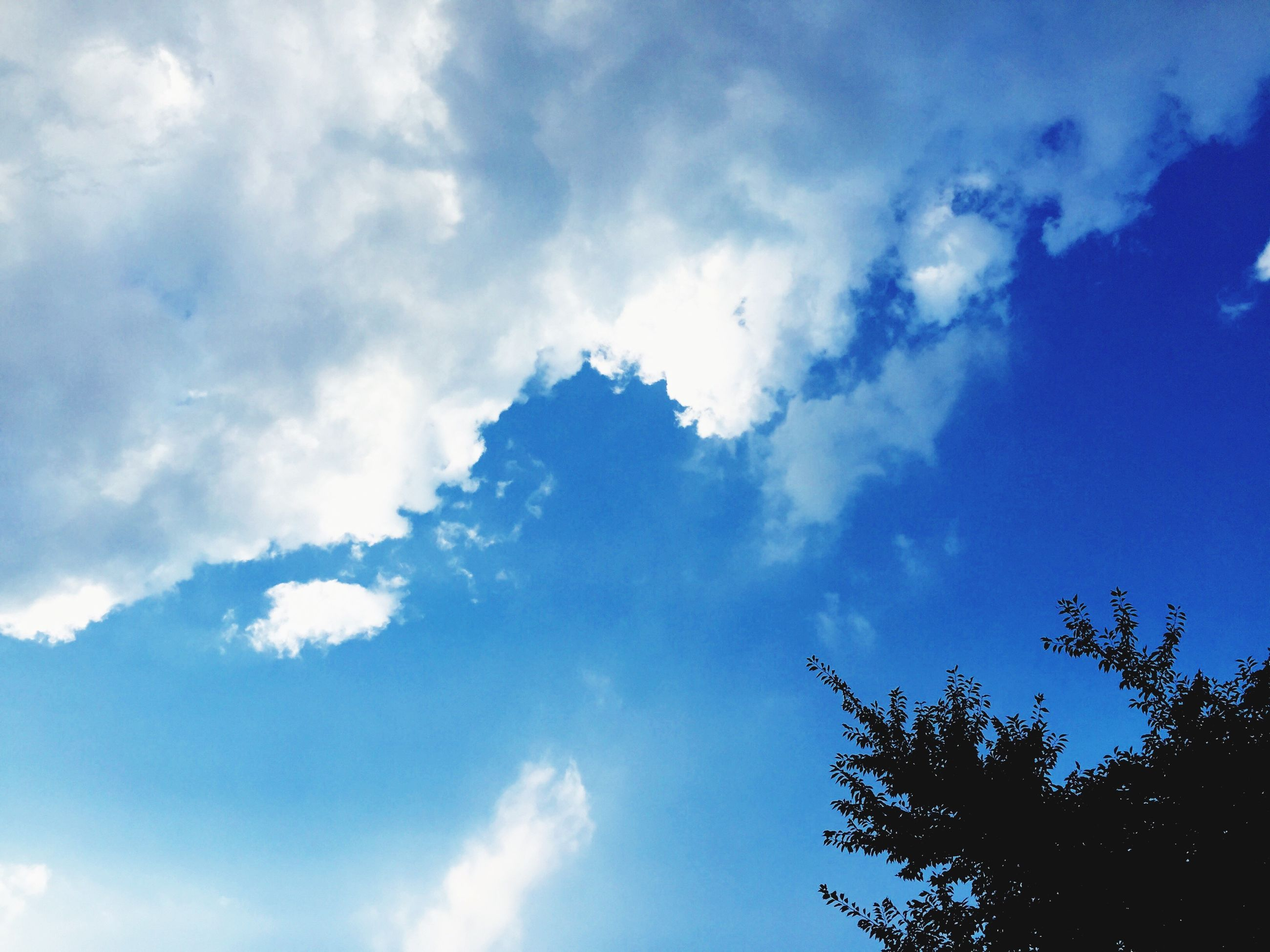 low angle view, sky, blue, cloud - sky, tree, beauty in nature, nature, tranquility, cloud, cloudy, scenics, high section, outdoors, growth, day, no people, tranquil scene, treetop, idyllic, backgrounds