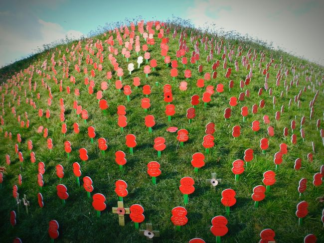 Remembrance Poppies  Ww1 World War 1 Memorial World War 1 Thiepval France The Somme