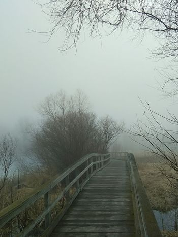 Board Walk The Way Forward Tree Railing Sky No People Nature Outdoors Fog Tranquility Tail End Of Winter! Texture Lochness Park Morning Grey Skies Wet Scenics No Edits EyeEm New Here