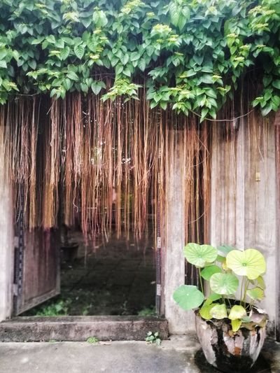 Thai style entrance Plant Growth Nature Tree Outdoors Green Color Leaf No People Day Beauty In Nature Water Sky Door Entrance Portal Entrance Nature Tree