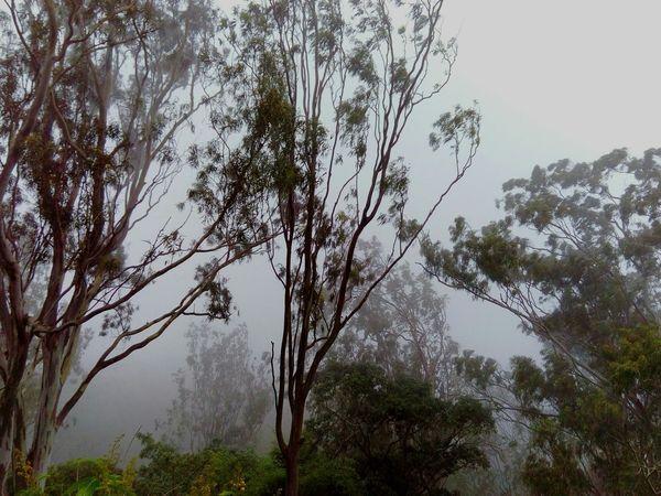 Tree_collection  Foggy Morning Nature Photography Bangalore India