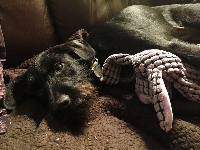 Ilovemydog Dog❤ I Love My Dog Dog Cuddles Cuddlebuddy Hanging Out Rainy Days Always Be Cozy