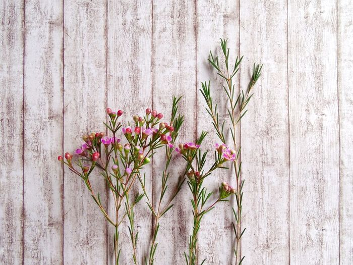 Close-up of wild flowers against wooden wall