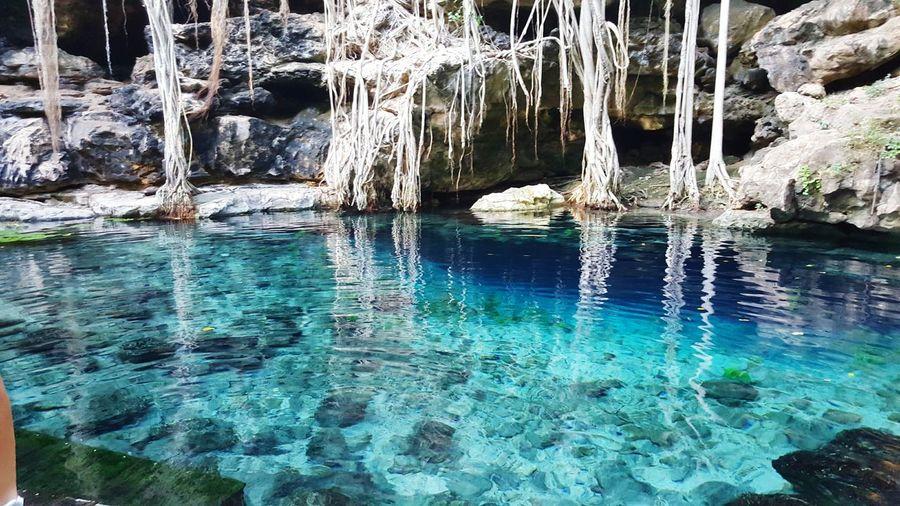 Cenotes yucatan san antonio mulix Cenotes Yucatan Mexico Paisaje Natural Enyoing Life Mexico_maravilloso Naturaleza Relaxing Time
