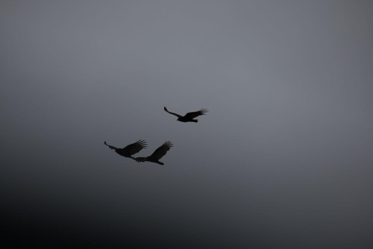 Silhouette Birds Flying Against Sky At Dusk