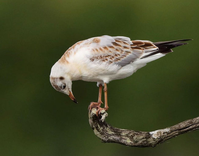 Close-up of seagull perching on a bird