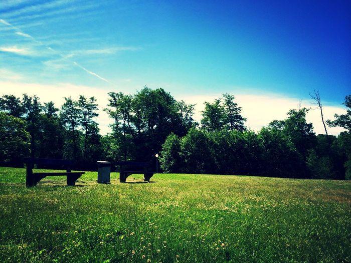Summer Sun Hot Ikea-land