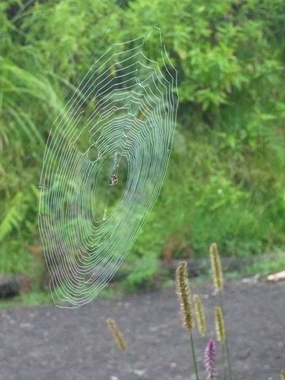 Itsy bitsy spider Animal Themes Animal Wildlife Beauty In Nature Bromo Mountain Close-up Day Grass Green Color INDONESIA Itsy Bitsy Spider Jungle Natural Pattern Nature Outdoors Selective Focus Spider Spiderweb Trekking Wildlife