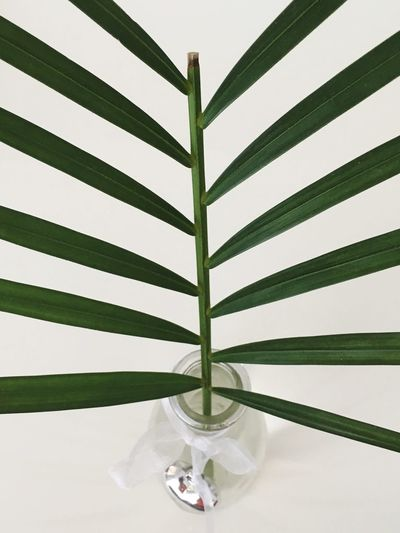 Tropical Climate green