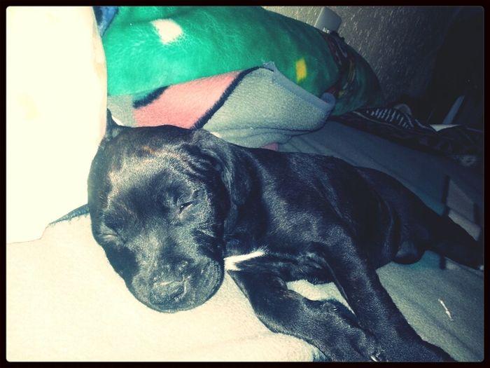 La meua xica fent la siesta :)
