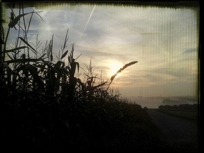 Sun_collection Nature_collection Landscape_Collection Landscape #Nature #photography