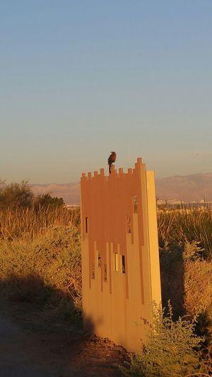 Bird Perched Blackbird Blackbirds Duck Blind Nature No People Outdoors Sky