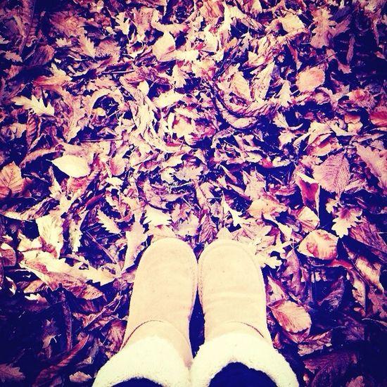 Autumn ???????