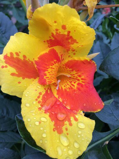 Flower Flowering Plant Beauty In Nature Flower Head Petal Inflorescence Plant
