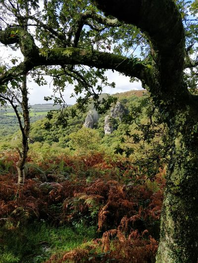 Dewerstone Rocks Dartmoor Tree Nature Day Growth Outdoors No People Grass Forest Beauty In Nature Branch Water Sky Freshness