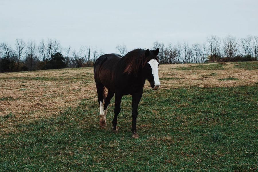 Horse 1 Horse Pasture Animals Animal Grazing